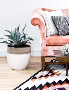 rug, sofa, plant