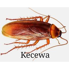As far as possible, this post will concentrate on pest control tips that would assist keep away as much pests as you can. Some of the advises provided here will deal on specific pests but some may … Roaches, Fleas, Types Of Termites, Cockroach Control, Rat Control, Mosquito Control, Termite Control, All Meme, Insects
