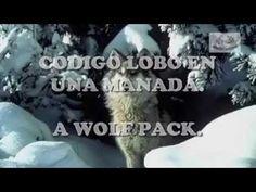 Conoce y Aprende del Código del Lobo - Renuevo De Plenitud » Renuevo De Plenitud