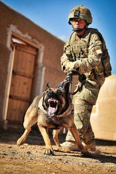 #Vigo the Military Working Dog...  Like,Repin,Share, Thanks!