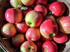 Basket Of Apples 02