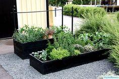 Raised Vegetable Garden Beds Can Be A Great Gardening Option Raised Garden, Patio Garden, Plants, Backyard Landscaping, Herb Garden, Urban Garden, Raised Vegetable Gardens, Modern Planters Outdoor, Modern Garden