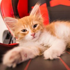Cat Boarding, Beautiful Cats, Cute Cats, Animals, Animales, Animaux, Animais, Funny Cats, Animal