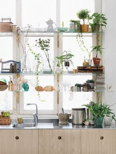 Shelves in the kitchen with plants in front of them... Home: Eleven Leafy Rooms To Admire  (Petra Bindel photo , via Agent Bauer)