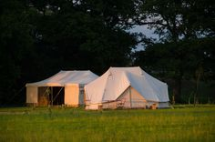 Knepp safaris wildland safaris camping courses south east england west sussex large
