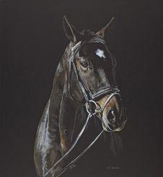 Equines | Helen Bailey Fine Art