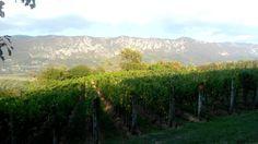 GOČE, THE OLDEST SLOVENIAN WINE VILLAGE