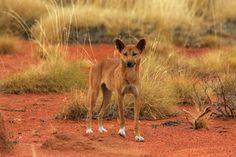 outback australia animals | Outback Australia