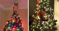 Cats love to attack anything that's shiny, so during Christmas, the target is pretty obvious. The funny thing is that cats are one of the few creatures on this planet that can completely destroy your Christmas and make you go 'Aaaw' at the same time.