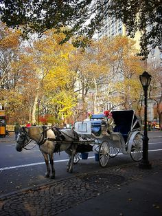 Horse Drawn Carriage Ride, Grand Army Plaza, New York City by Vivienne Gucwa