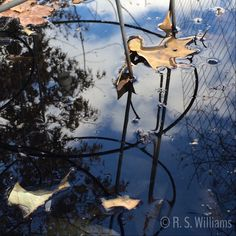 """""""Leaves, Water, Wire, Sky"""" (Heard County, Georgia - 27 November 2014) --- Wednesday Photo: 12/3/14 