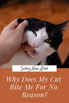 Cat Training Scratching Learn more about cat behavior and how you can prevent your cat from biting and scratching you! Word Cat, Cat Biting, Cat Urine, Feral Cats, Cat Behavior, Cat Sleeping, Cat Health, Beautiful Cats, Cat Breeds