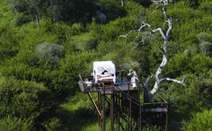 This is a tree house in South Africa.  For $300/night you can stay under the stars and listen to the wildlife beneath you.  AMAZING!