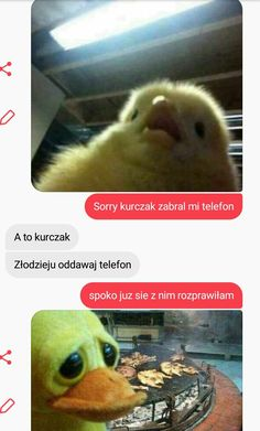 That's True Memes Funny Sms, Wtf Funny, Polish Memes, Everything And Nothing, True Memes, Warrior Cats, Funny Stories, Best Memes, Funny Animals