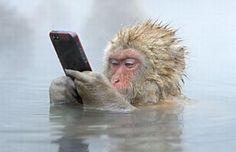 Un singe vole l'iphone d'un touriste, les photos insolites des animaux 2014