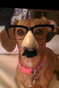 Groucho-weenie