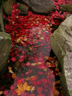 Autumn leaves in a river. I know we are just getting to Spring, but this makes me wish it was Autumn!