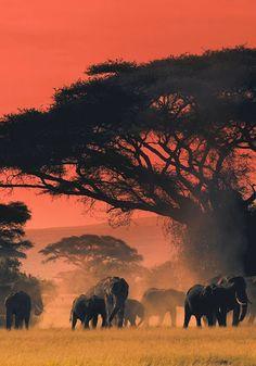 makes you enjoy your safari game African Animals, African Elephant, African Safari, Wildlife Photography, Animal Photography, Afrika Tattoos, Save The Elephants, Baby Elephants, Elephant Love