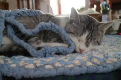 Sweet Dreams | #cats #animals #cute #Kitty