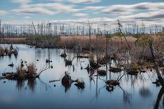 Maryland Marshland [1200 x 801]