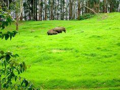 Beauty ofKerala | Beauty of Kerala
