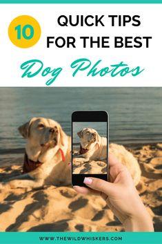 Dog photoshoot pet photography baby photos 35 ideas for 2020 Pet Photography Tips, Animal Photography, Creative Photography, Best Dog Photos, Baby Photos, Pet Quotes Dog, Taking Dog, Dog Grooming Business, Hacks