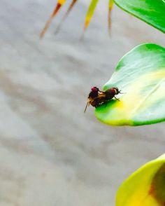 flies in spring romantic ❤️❤️