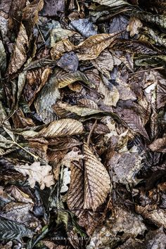 © Joanna Ulfsdotter Photography Quilts, Meat, Sayings, Photography, Photograph, Lyrics, Quilt Sets, Fotografie, Photoshoot