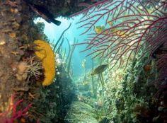 Fauna_flora_marina_Rias_Baixas Flora Marina, Flora And Fauna, Ocean, Pets, Underwater Life, Flowers, Underwater, Animales, The Ocean