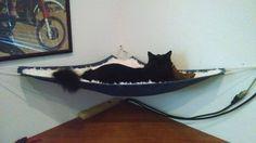 Available end of Oct. Cat Hammock, Cat Walk, Cat Furniture, Essentials, Corner, Yard, House Design, Organization, Spaces