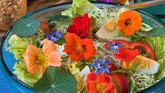 Připravte si z ní bylinnou tinkturu! Interior Design Living Room, Herbs, Backyard, Gardening, Table Decorations, Flowers, Diy, Home Decor, Decor Ideas