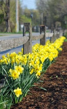 Spring Flower Bulbs Spring Bulbs - Here are a some tips to help ensure your bulb plantings are successful.Spring Bulbs - Here are a some tips to help ensure your bulb plantings are successful. Garden Bulbs, Planting Bulbs, Garden Plants, Flowers Garden, Planting Daffodil Bulbs, Gardening Vegetables, Fruit Garden, Container Gardening, House Plants
