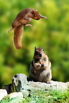 YOU STOLE MY NUTS!