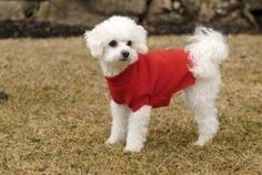 Baxter's Basic Dog Sweater ** Unbelievable dog item right here! : Dog sweaters