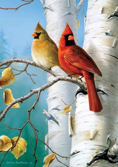 James Hautman - Cardinals and Birch