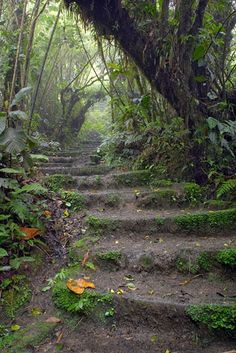 Earthen stairway on the Sendero Pantanoso or Swamp Trail at the Monteverde Reserve.