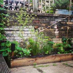 This years cottage garden