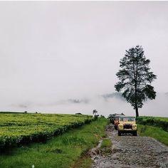 shot by @markushaposan  taken at pangalengan -------- Jika anda berkunjung ke pangalengan yang menjadi tujuan wisata di Bandung maka hal yang bagus sekalian anda bisa belajar di pabrik teh pangalengan. Perkebunan Teh Malabar adalah salah satu perkebunan yang dapat kita kunjungi yang sangat luas dan dingin pastinya.  Perkebunan teh Malabar di Pangalengan Kabupaten Bandung dengan jarak kurang lebih 40 Km dari kota Bandung. Perkebunan ini terletak di ketinggian 1.550 mdpl. Jadi tidak heran…