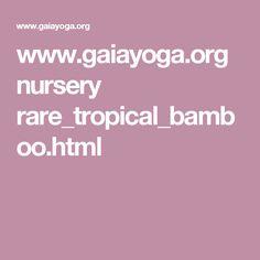 www.gaiayoga.org nursery rare_tropical_bamboo.html
