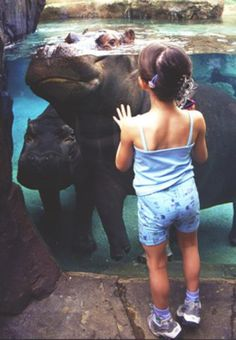 The Top 10 Things to See and Do in St. Louis' Forest Park: The St. Louis Zoo