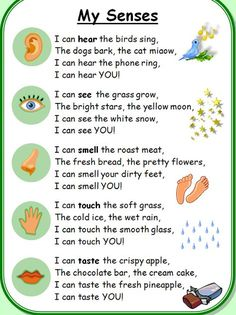 Get silly and learn about the five senses. I bet this will make your little one giggle! Preschool fingerplay songs and stories help children develop gross & fine motor skills, improve memory, and gain social skills. Best of all, they are FUN! Five Senses Preschool, My Five Senses, Preschool Songs, Preschool Lessons, Preschool Classroom, 5 Senses Poem, 5 Senses Activities, Children Activities, Kindergarten Poems