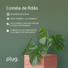 Monstera Deliciosa, House Plants Decor, Plant Decor, Eco Garden, Herbal Magic, Plants Are Friends, Bedroom Plants, Green Life, Plant Care
