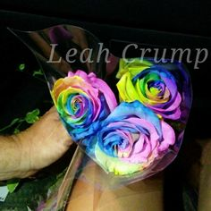 Real Rainbow Colored Roses (Color Not Photo Chopped!