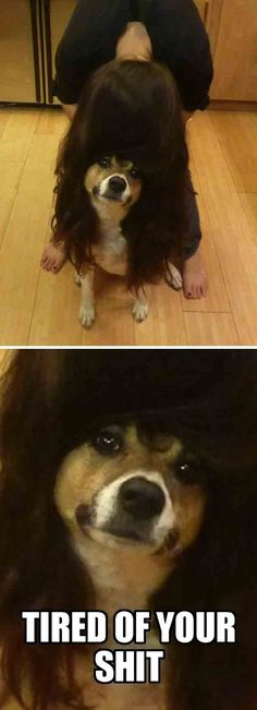 This dog who is so lost in confusion, he's just FED UP WITH IT.  --26 dogs who have literally no idea what's going on right now