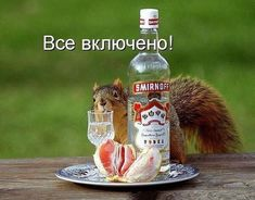 Smirnoff, Man Humor, Squirrel, Vodka Bottle, Funny Quotes, Funny Pictures, Drinks, Memes, Chistes