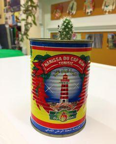 New office pet from @instamaticks #leeds #leedslife #igersleeds #cactus #harrissa #officelife #pin