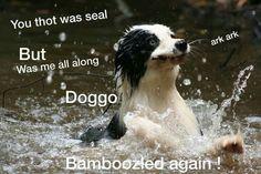 Bamboozled again!