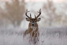 Since 2001 Field N Water has been offering the outdoors explorer with a place to call home and to make new friends. Big Whitetail Bucks, Whitetail Hunting, Elk Hunting, Whitetail Deer Pictures, Rare Animals, Strange Animals, Big Deer, Deer Family, Mule Deer