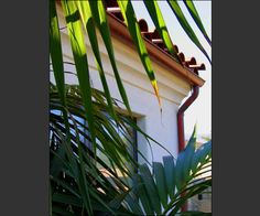 Transforming Santa Barbara Fixer Property to Spanish Home Spanish House, Spanish Style, House Roof, Santa Barbara, Plant Leaves, Plants, Home, Design, Ad Home