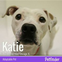 Katie shows off the very definition of puppy dog eyes. This lovable pup is waiting on her forever home!